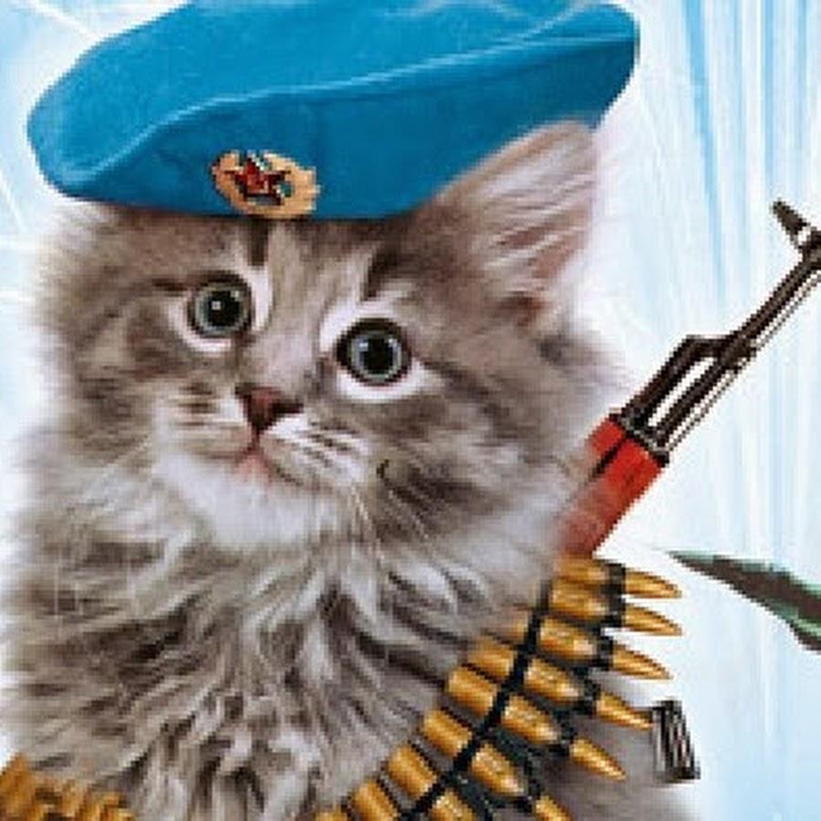 коты десантники картинки обитания