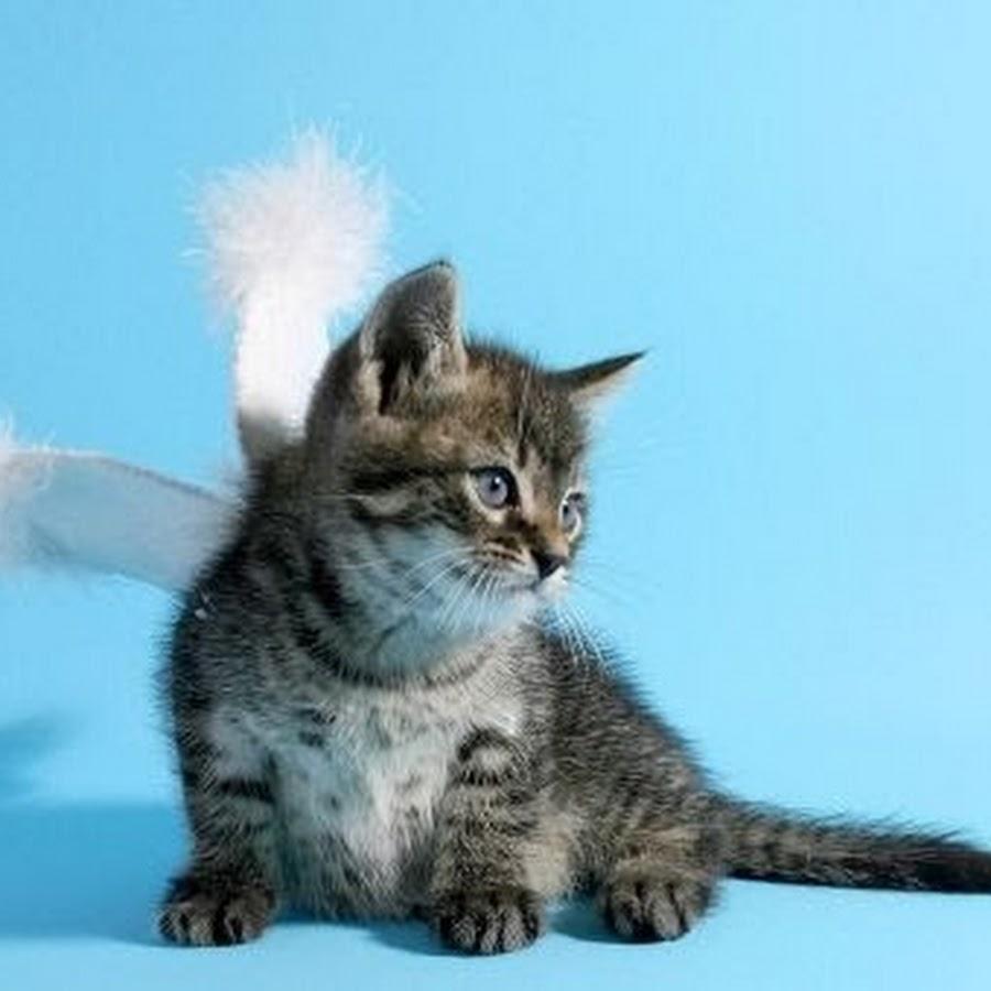 одна женщина кошачий ангел фото следующий раз крем
