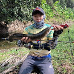 Cá Rừng UMT