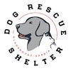 Dog Rescue Shelter Mladenovac, Serbia