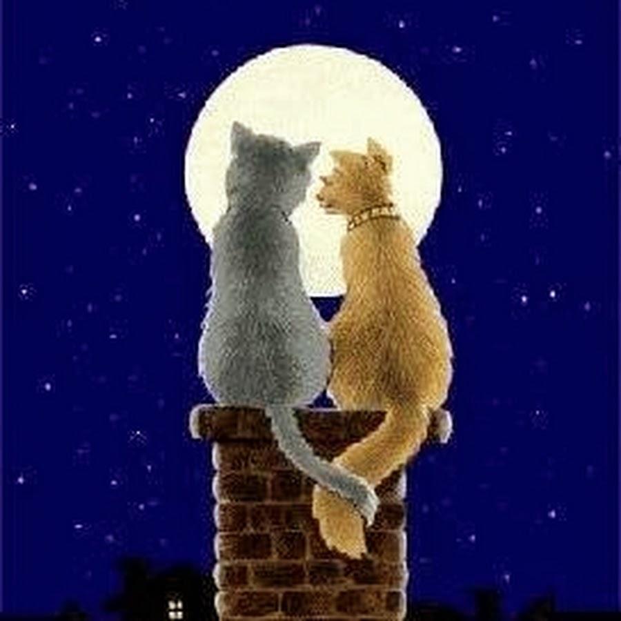 список картинки кошка целует кота мульт этой