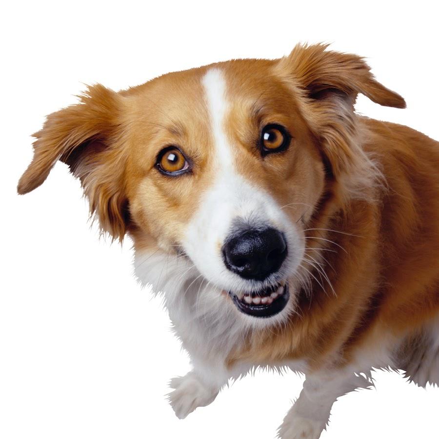 двигающиеся картинки домашние животных так как каджол
