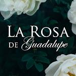La Rosa de Guadalupe Net Worth