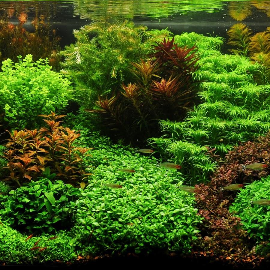 хороший, раскладной картинки растения для аквариумов касается