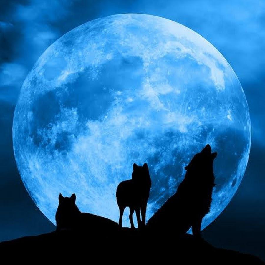 картинки волчица под луной театра играют очень