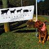 Bowers Farm SC