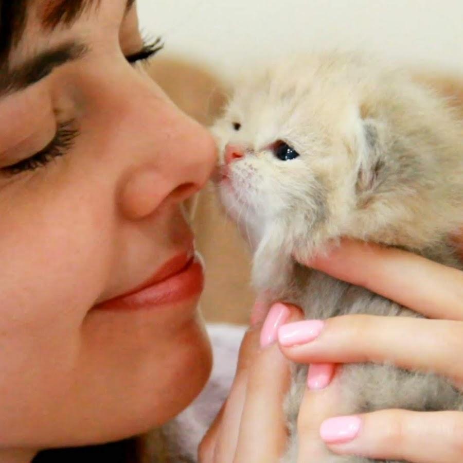Teddy Kittens