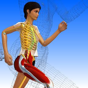 La femme modèle d'anatomie 3D Stacy