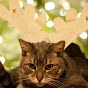 Animal Planet - @CatPlanetTV - Youtube