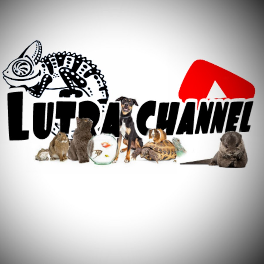 Lutra Channel - YouTube