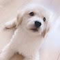 日本show TV
