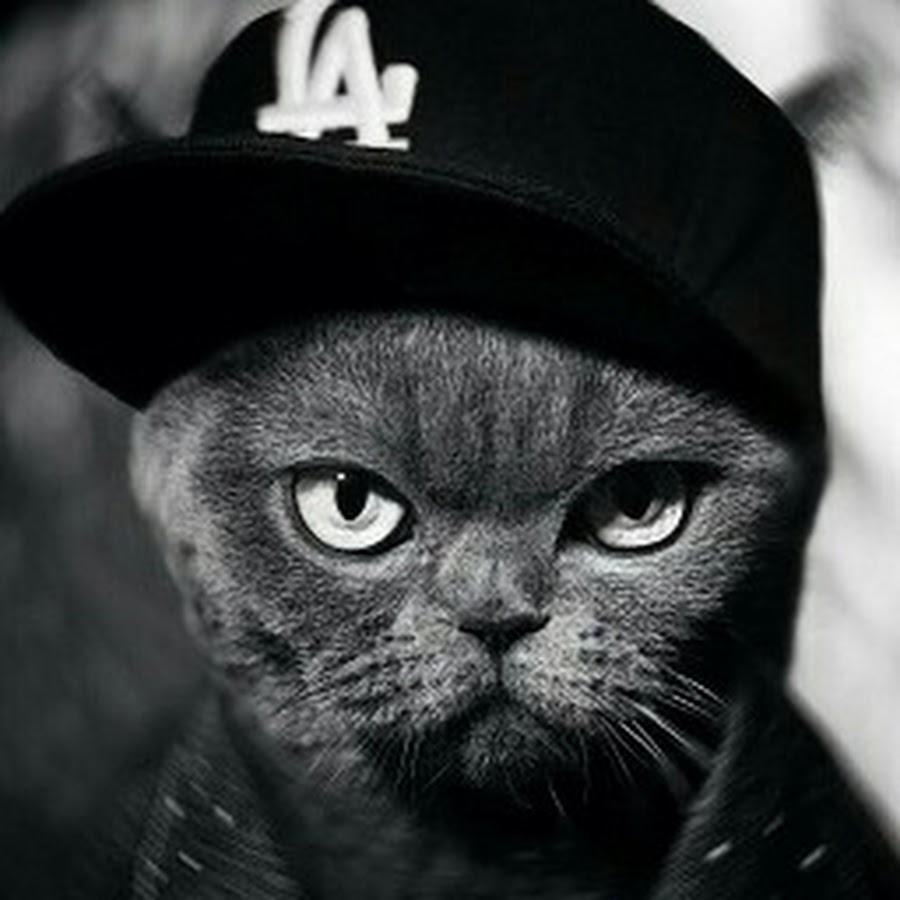тоже коты в кепках картинки растения некапризны достаточно