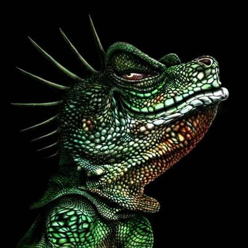 Iguana 2003