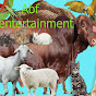 Abf entertainment