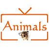 Animals TV