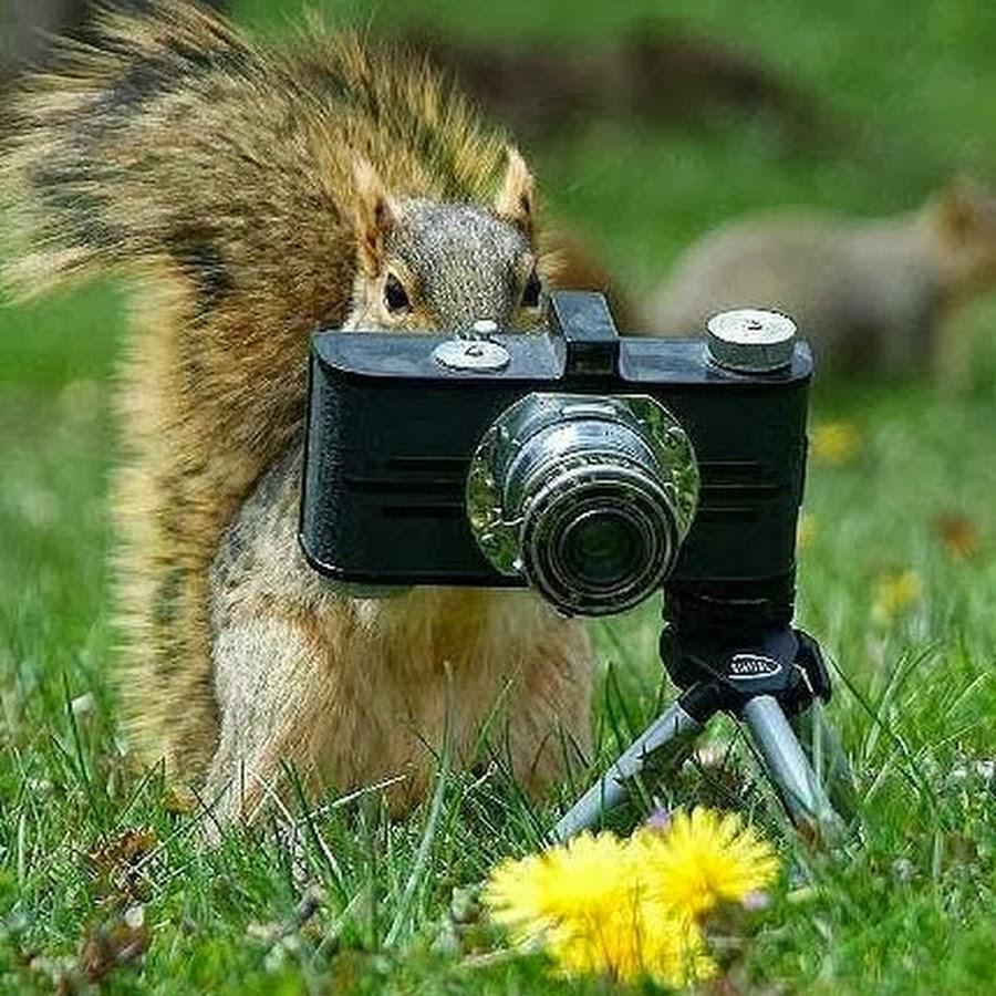 фото смешного фотоаппарата