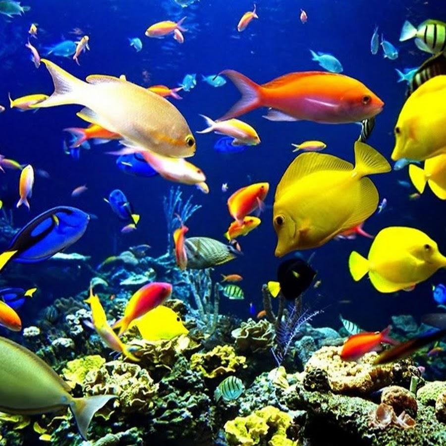 Aquarium Profi