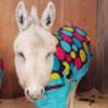Donkey Refuge