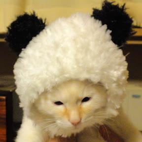 面白くてかわいい子猫チャンネル(YouTuber:面白くてかわいい子猫チャンネル)