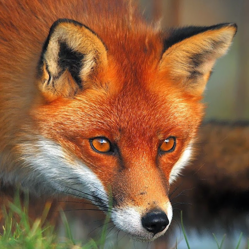The IvanTheFox Official Channel