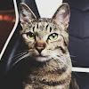 Pan Kermi Kot