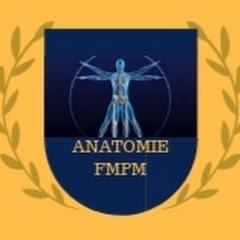 Anatomie FMPM