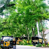 SB Tree Services