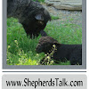 Shepherds Talk . . . All Things Fiber