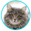 Halifax Cat Rescue Society