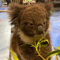 All Things Australia