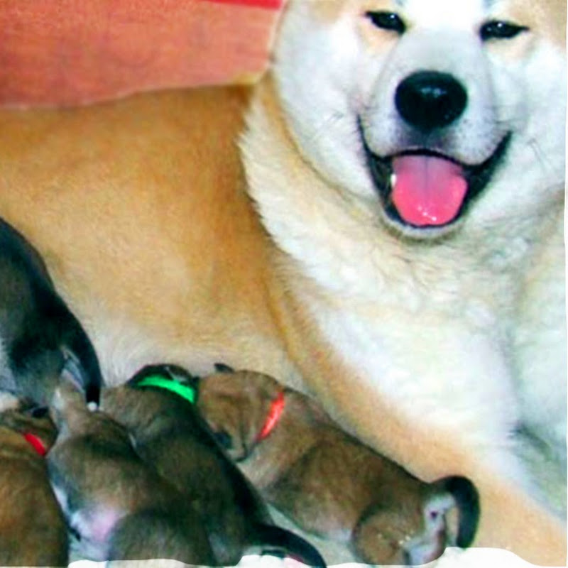 Story Animal Giving Birth