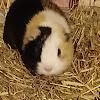TinTeddyVideos
