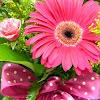 Jacobsen's Flowers