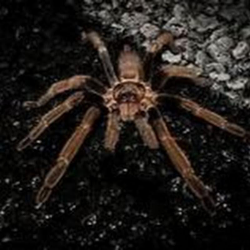 Spider Re (spider-re)