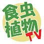 食虫植物TV -Carnivorous Plants videos-