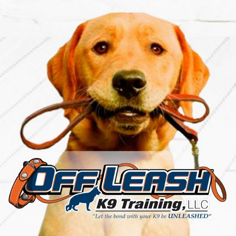 Off Leash K9 Training, Georgia