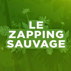 Combien Gagne Zapping Sauvage ?