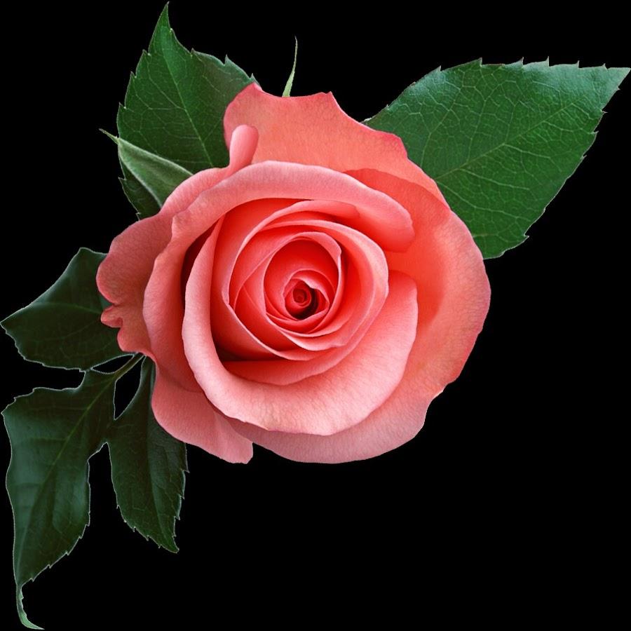 Картинки с днем рождения анимация розы