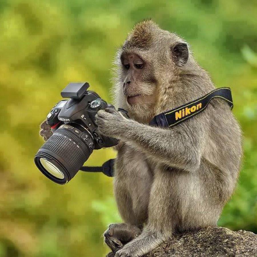 Фотоаппарат картинки прикольные, открытку добрым утром