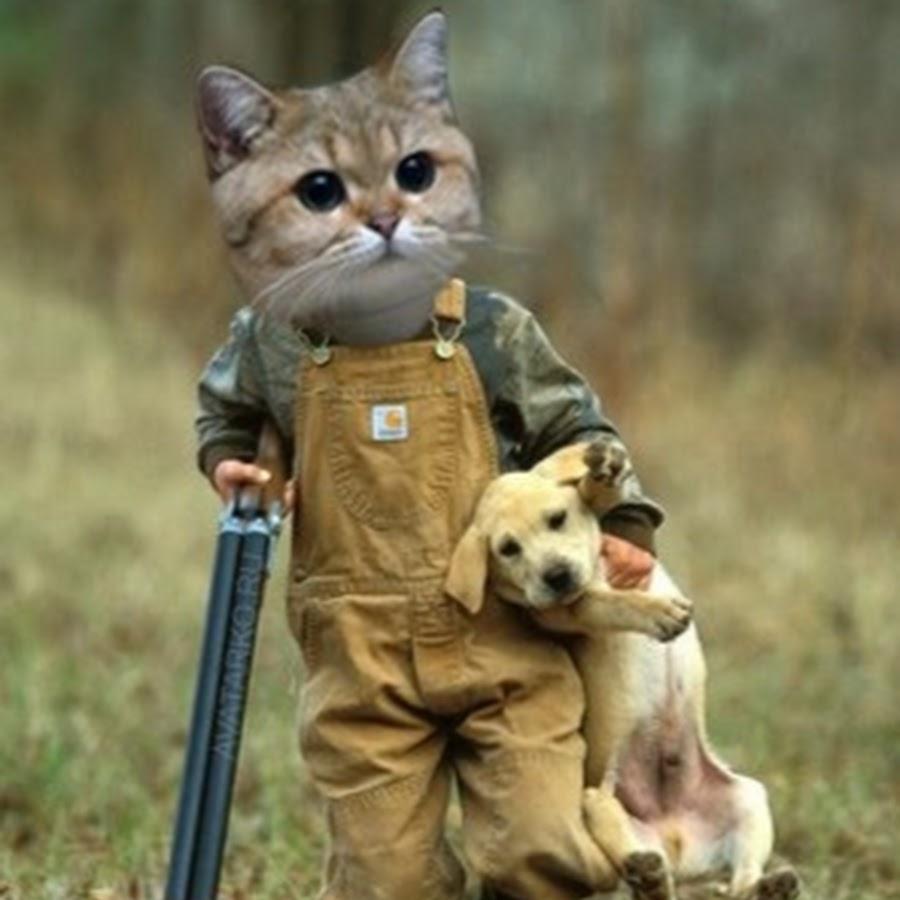 Лет маме, картинки злая кошка смешные с надписями