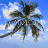 TOMOKI Nature Sounds & Landscapes
