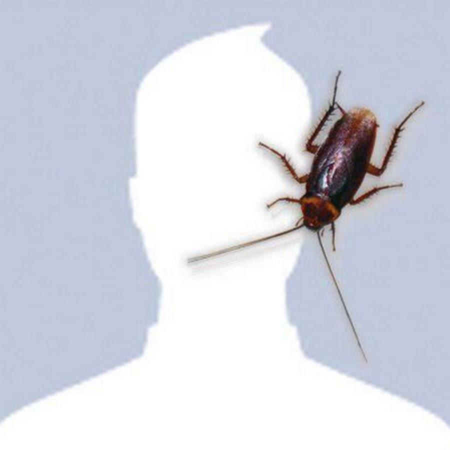 Картинка масленица, картинки прикольные на аву с мухой