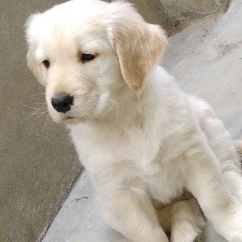 JeNNy tHe GoLden ReTriever (the-fact-show)