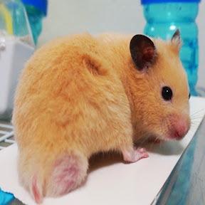 pooh hamster ユーチューバー
