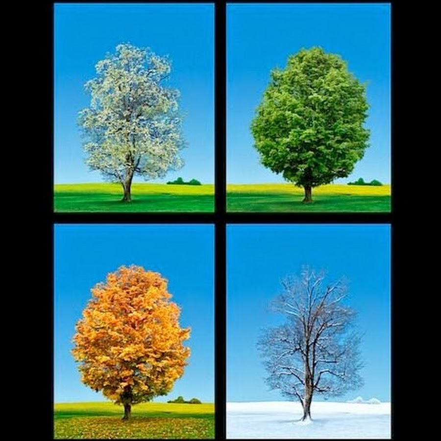 Four seasons collage — Stock Photo © terimma #143447011