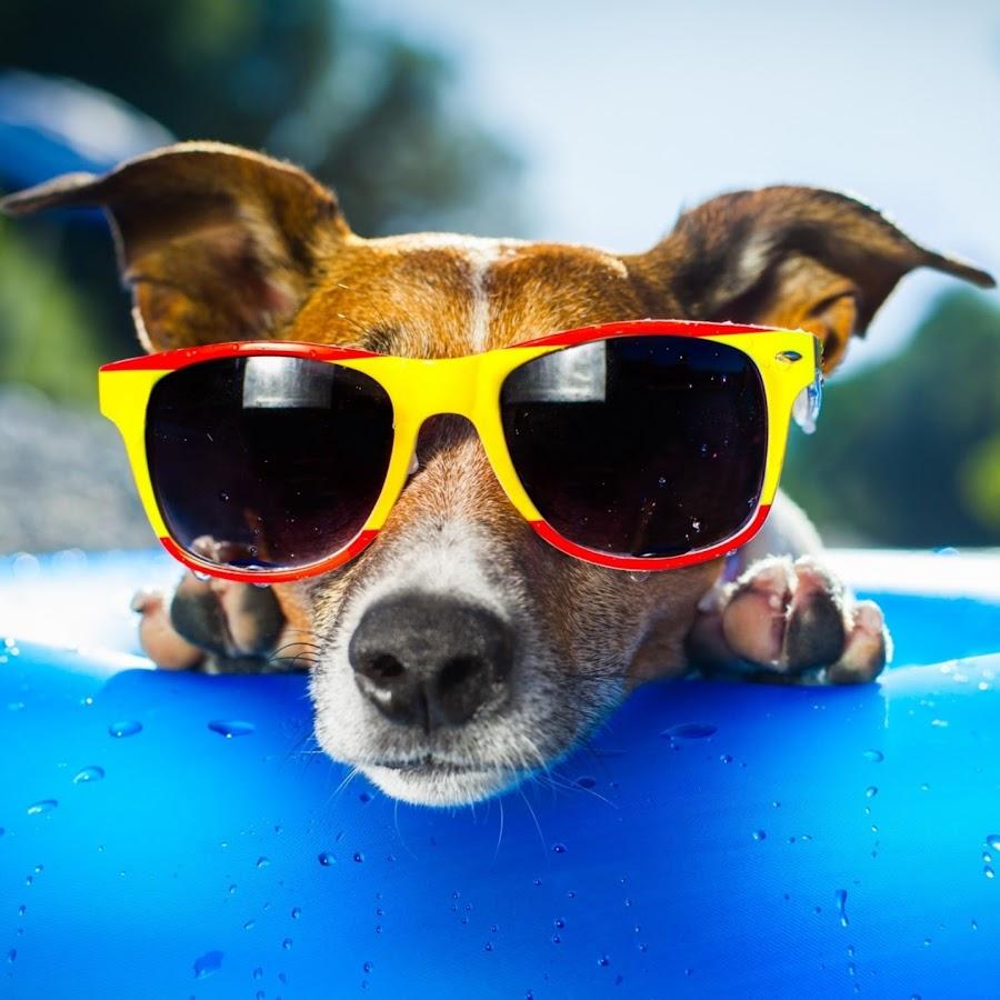 Лето 2016 картинки приколы, днем акушерки картинки
