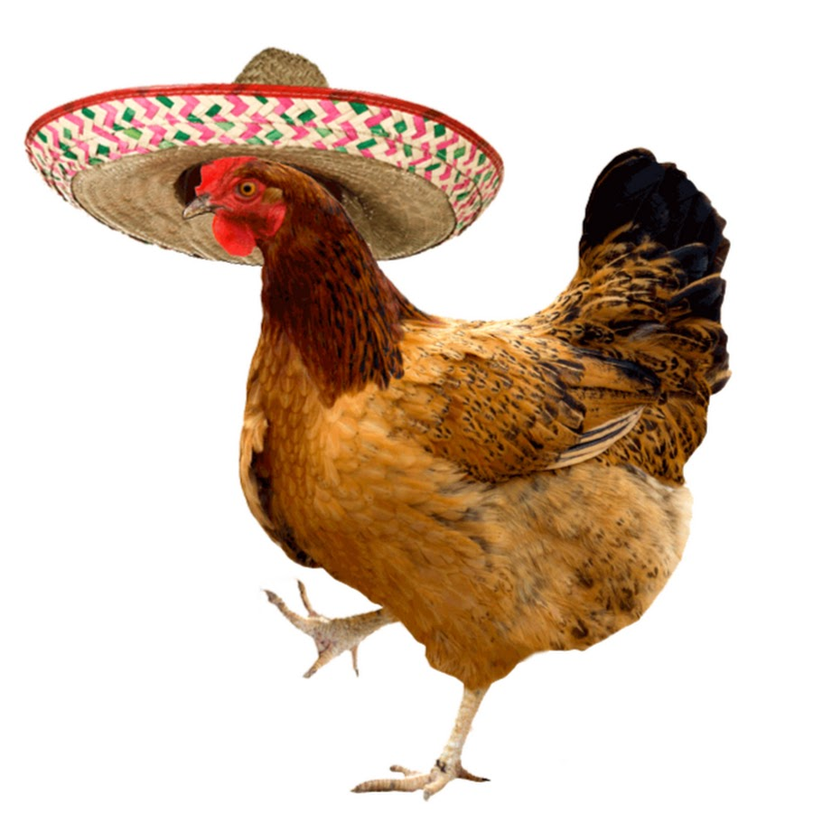 Курица гифы, открытка сентябрем