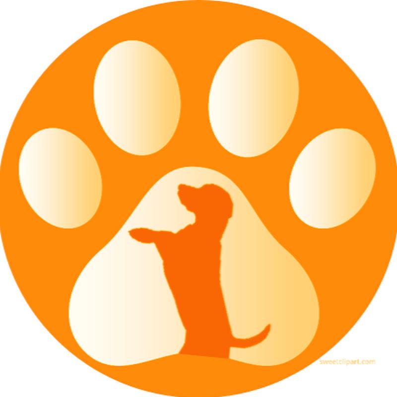 Dog Breed Info Share