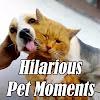 Hilarious Pet Moments