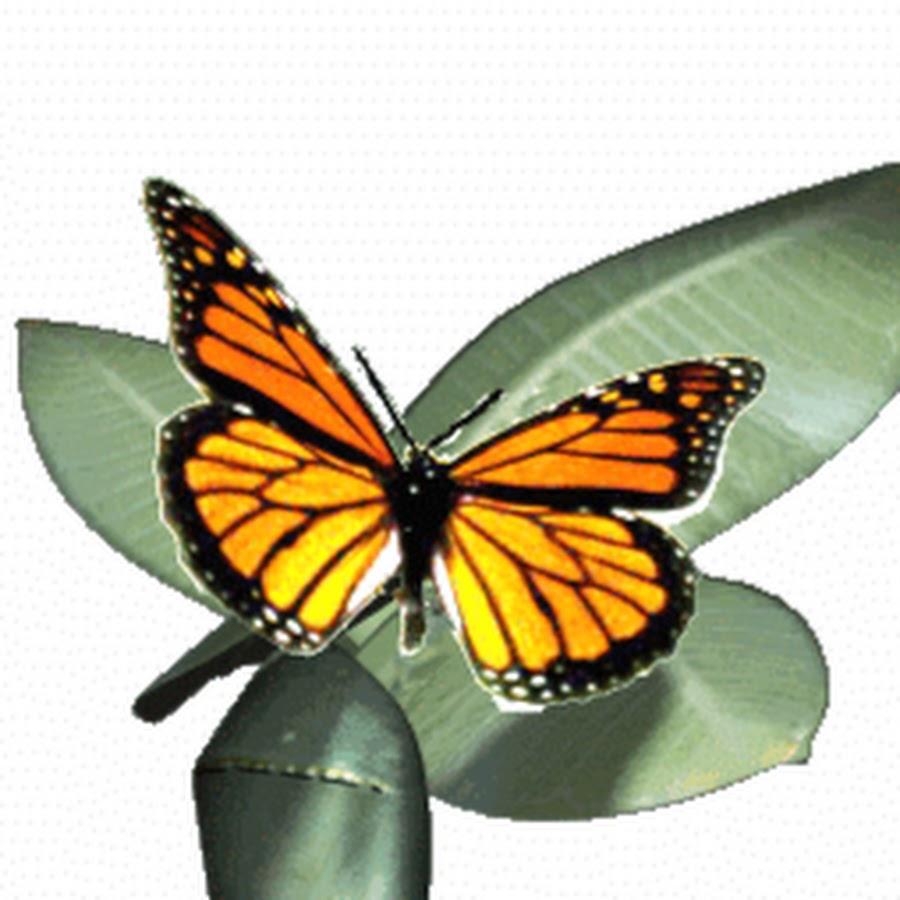 Картинка анимация бабочка порхает, картинки